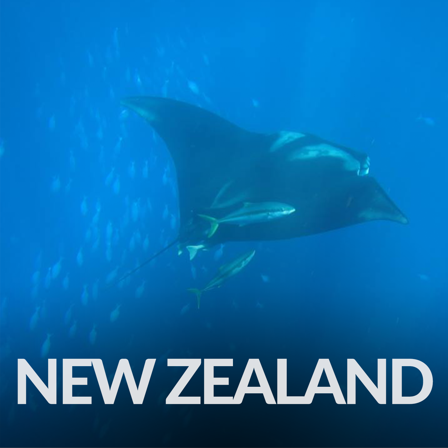 Our Affiliate Projects_Gallery_New Zealand.png