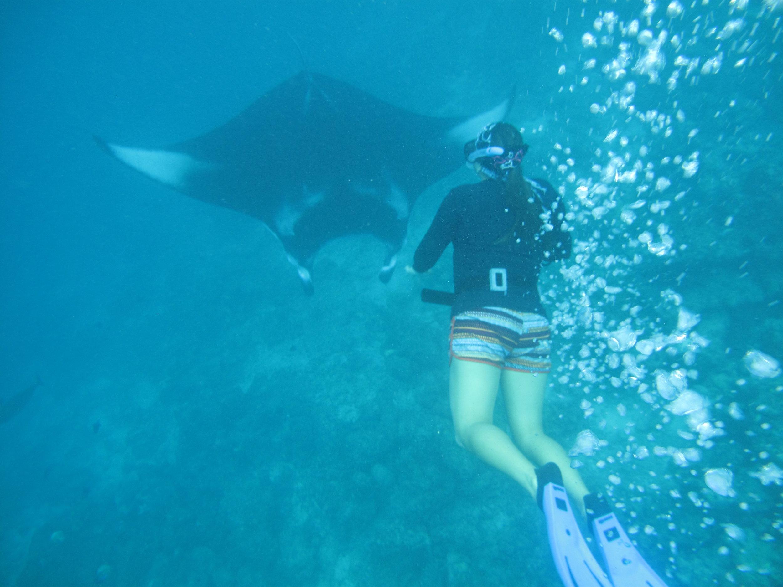 Stefany freediving down towards a reef manta ray, during an internship with the Maldivian Manta Ray Project.