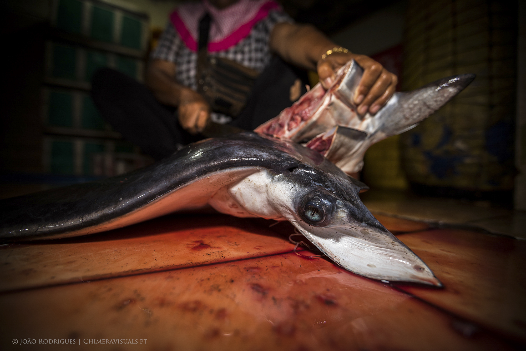 A dead devil ray landed in Indonesia.   Photo by Joao Rodrigues.
