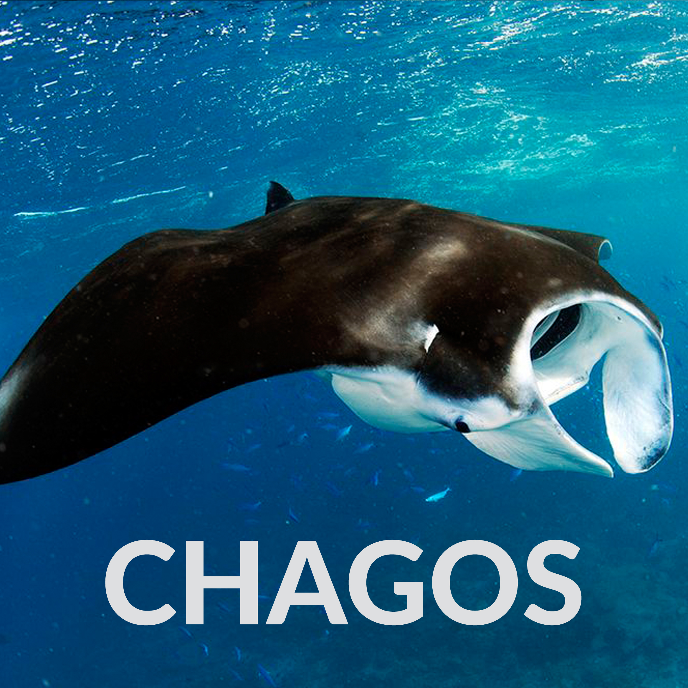 Tile for Chagos Page.jpg