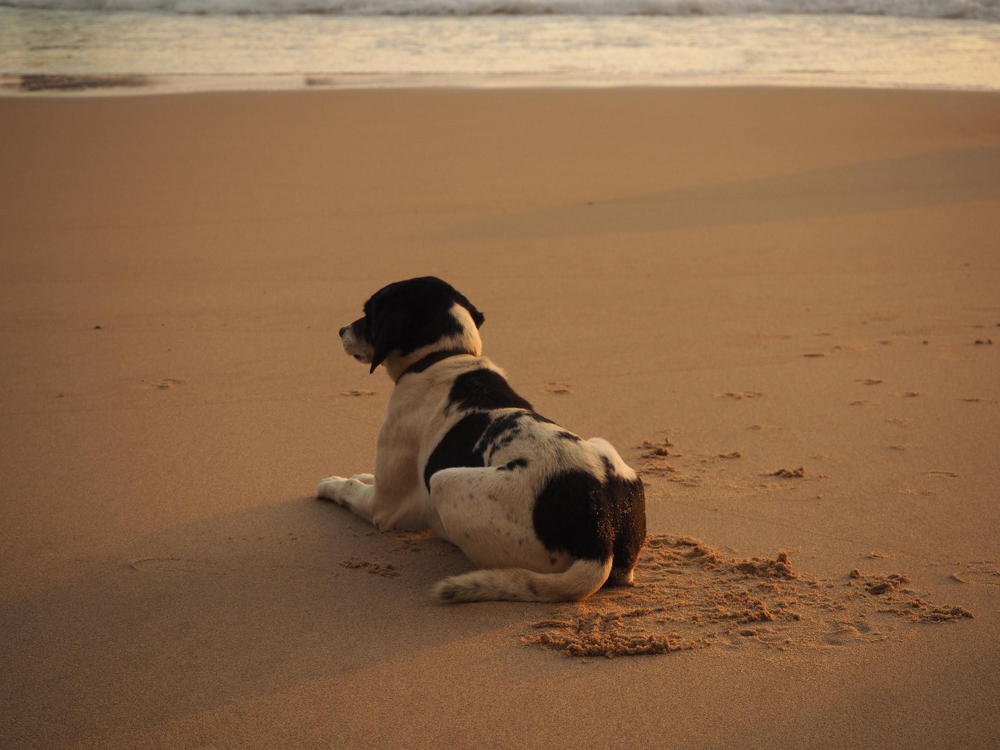 Dog. Photo by Hanne Kristin Berg
