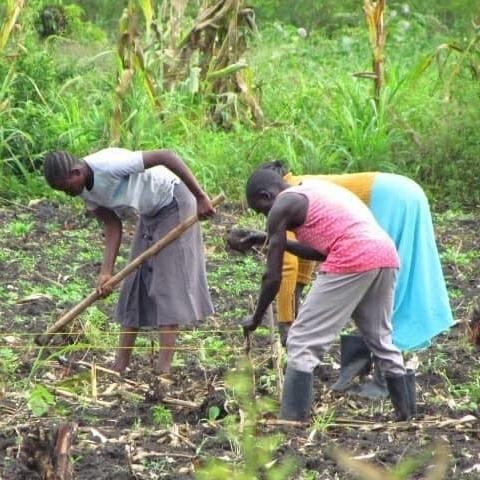Agriculture in Bidi Bidi