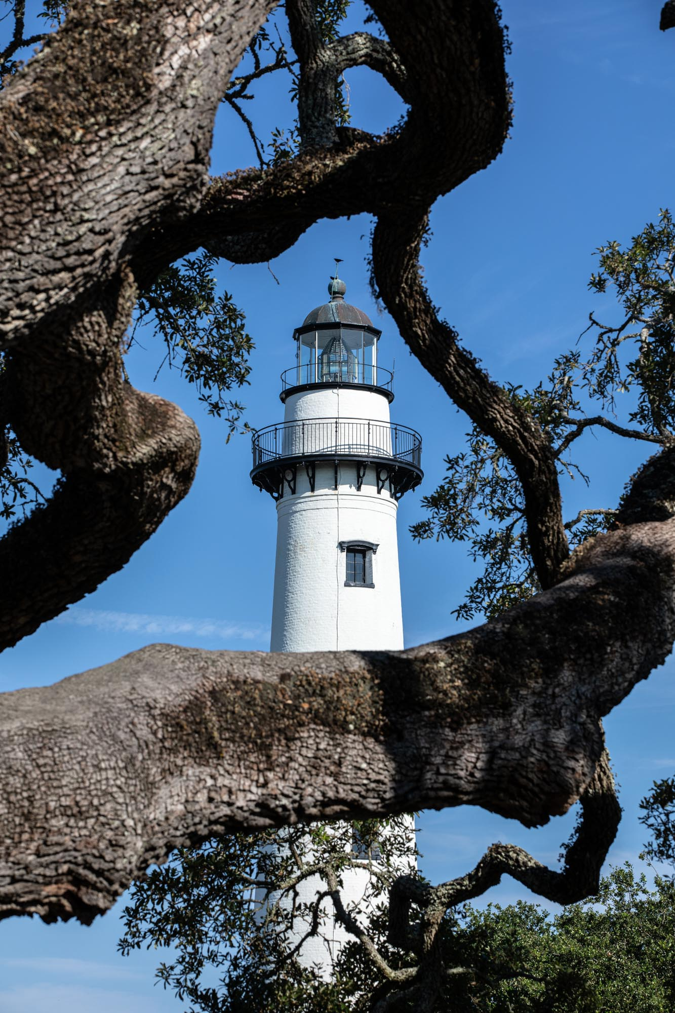 St. Simons lighthouse seen through the branches of a live oak tree.