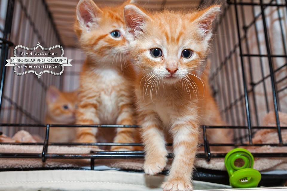 ginger kits2.jpg