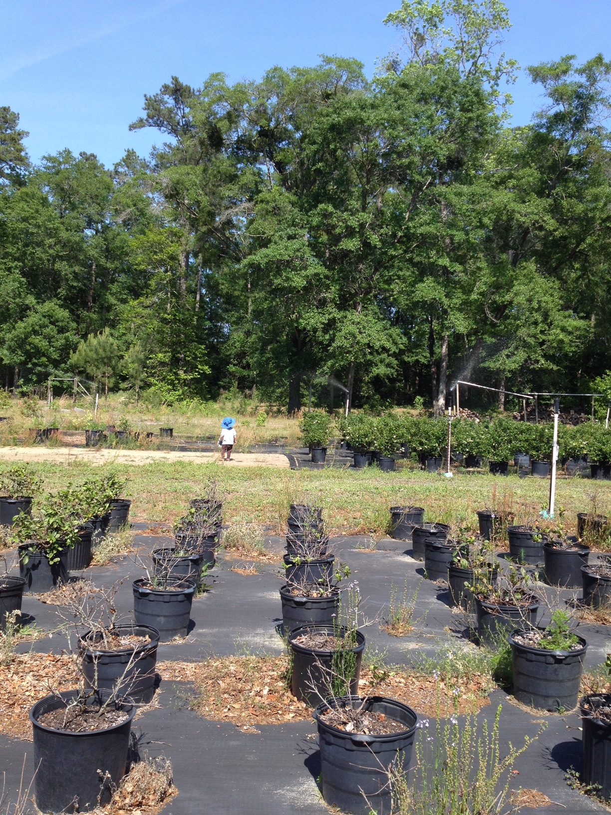 This was what the venue looked like as a plant nursery! First all of the plants had to be moved and then the ground cover fabric had to be removed along with the hundreds of pins holding it down.