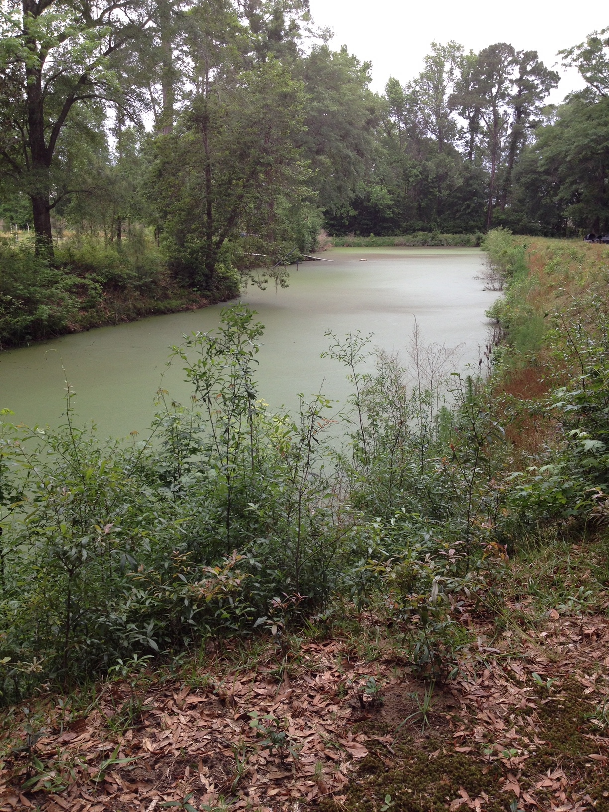 A view of the overgrown pond before it was cleared and the fountain installed! This was a huge accomplishment for these two women!