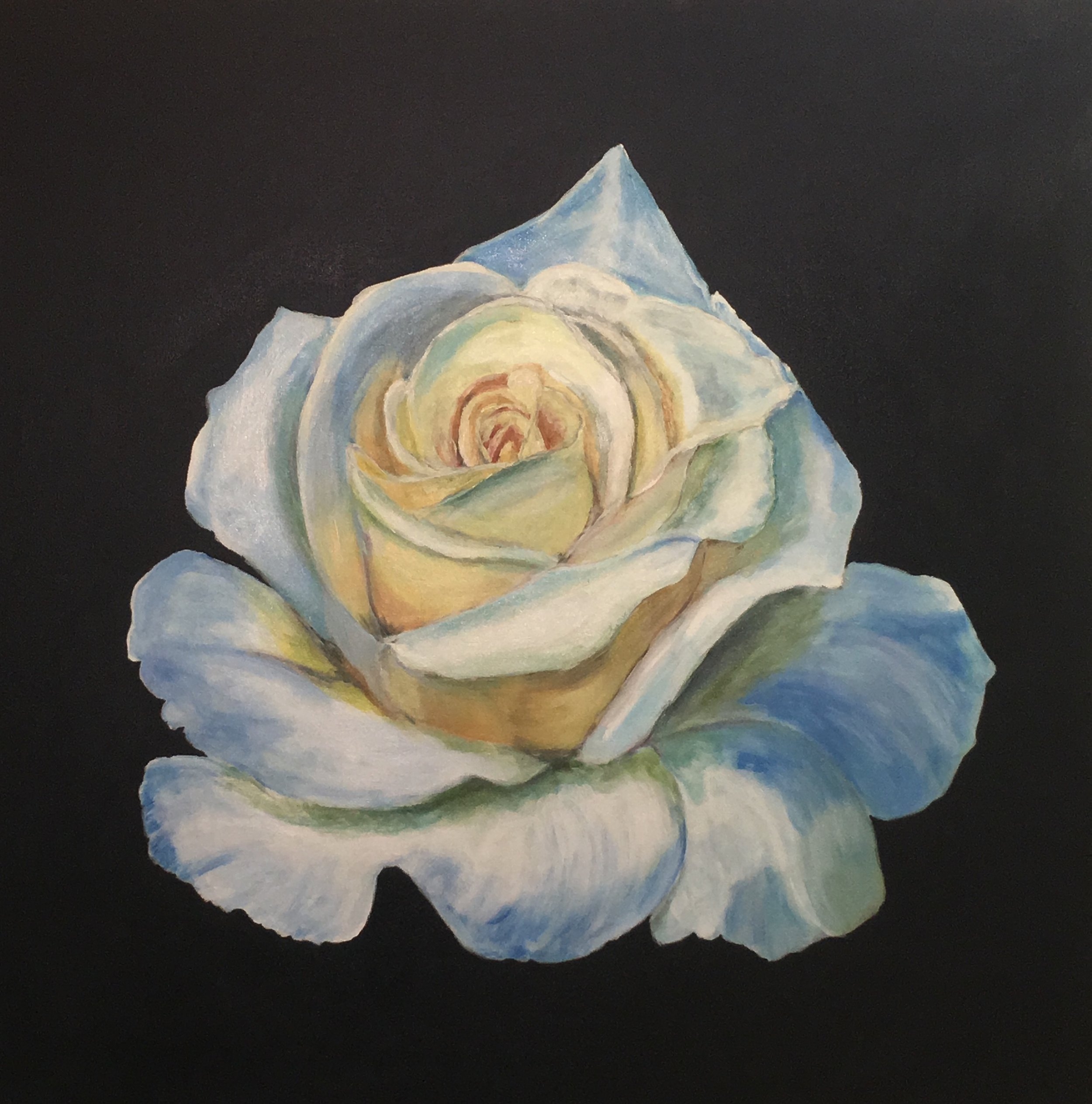 - White Rose / Acrylic on Canvas / 3' x3' / 2016