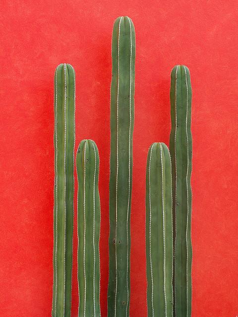 cactus@2x.jpg
