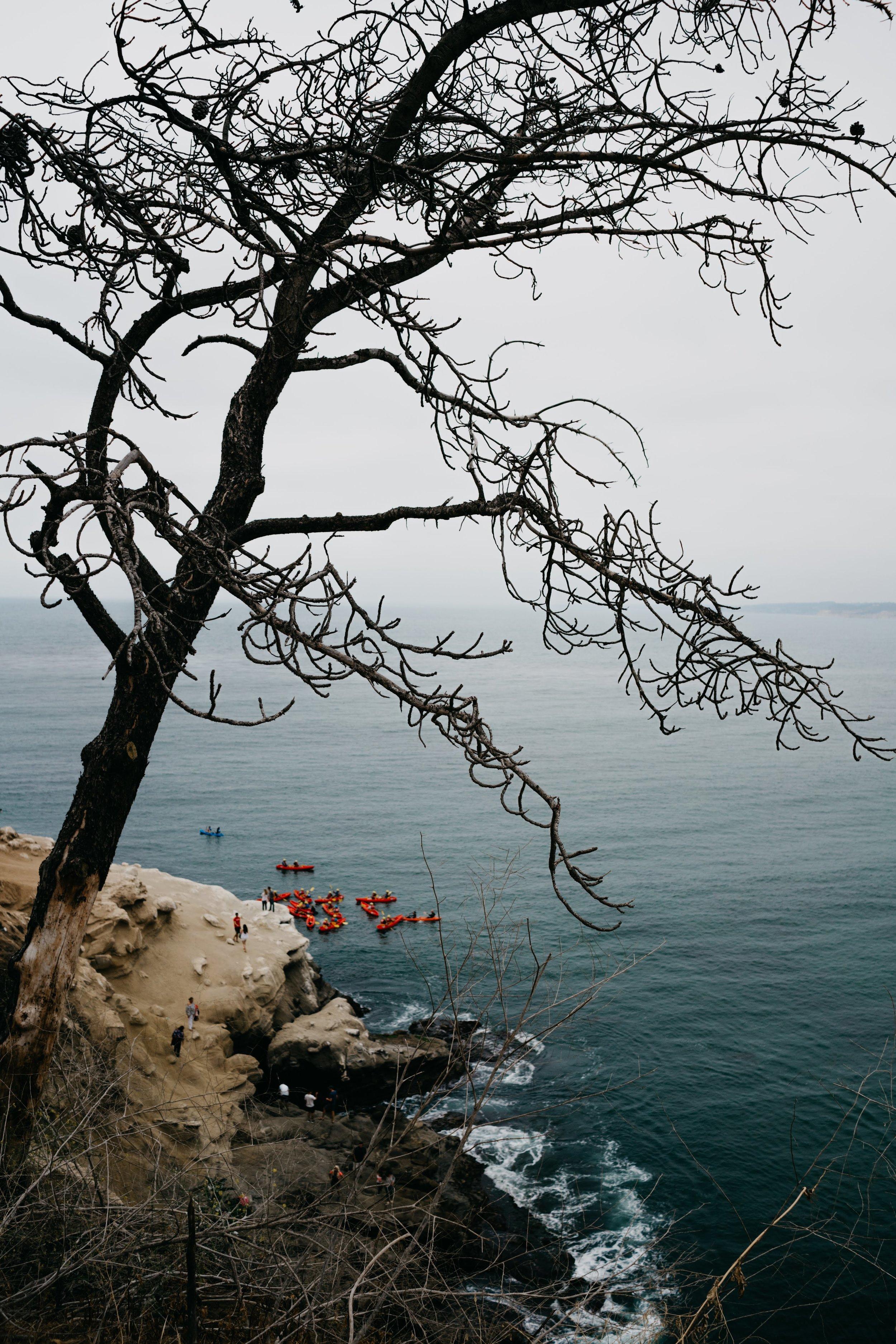 La Jolla Cove, San Diego /// DOODIEBEARZ.com