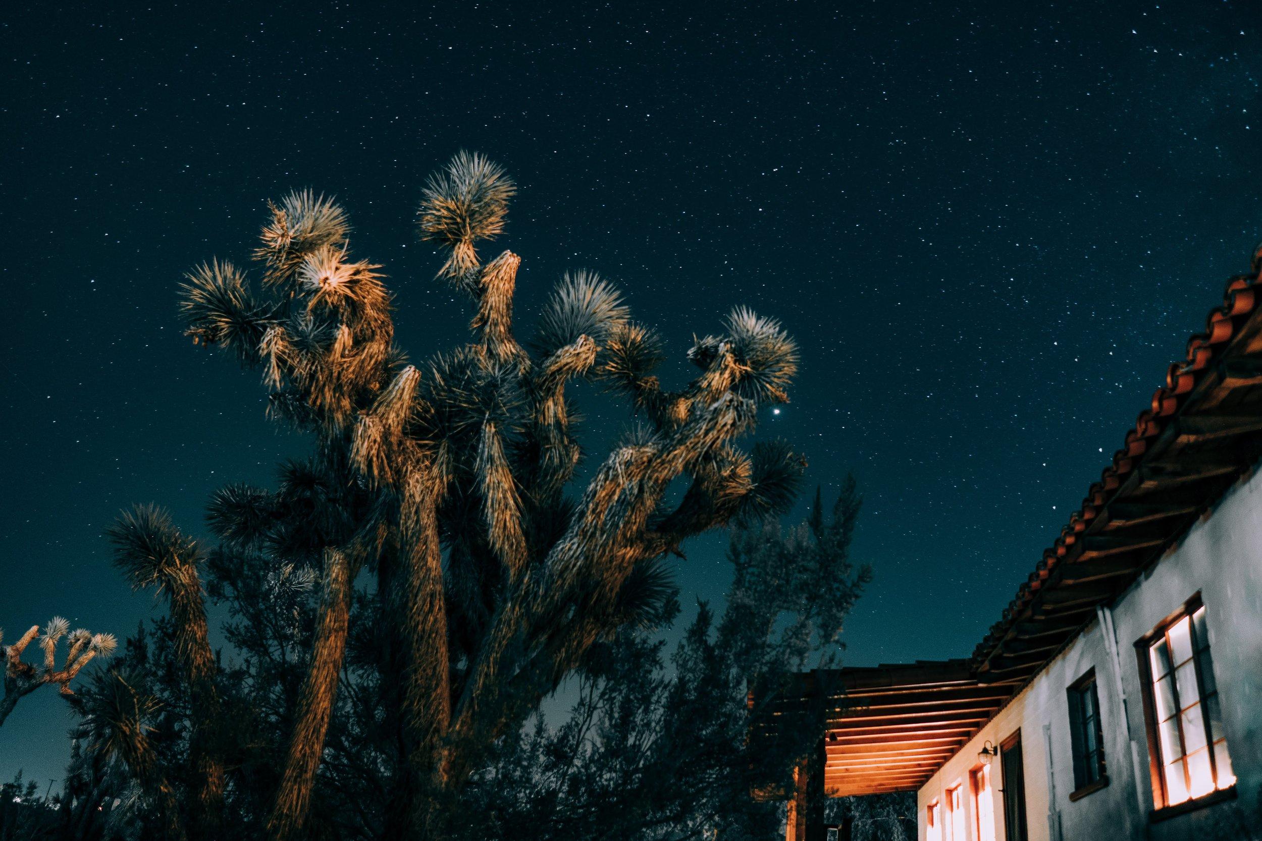 Joshua Tree, CA /// www.DOODIEBEARZ.com