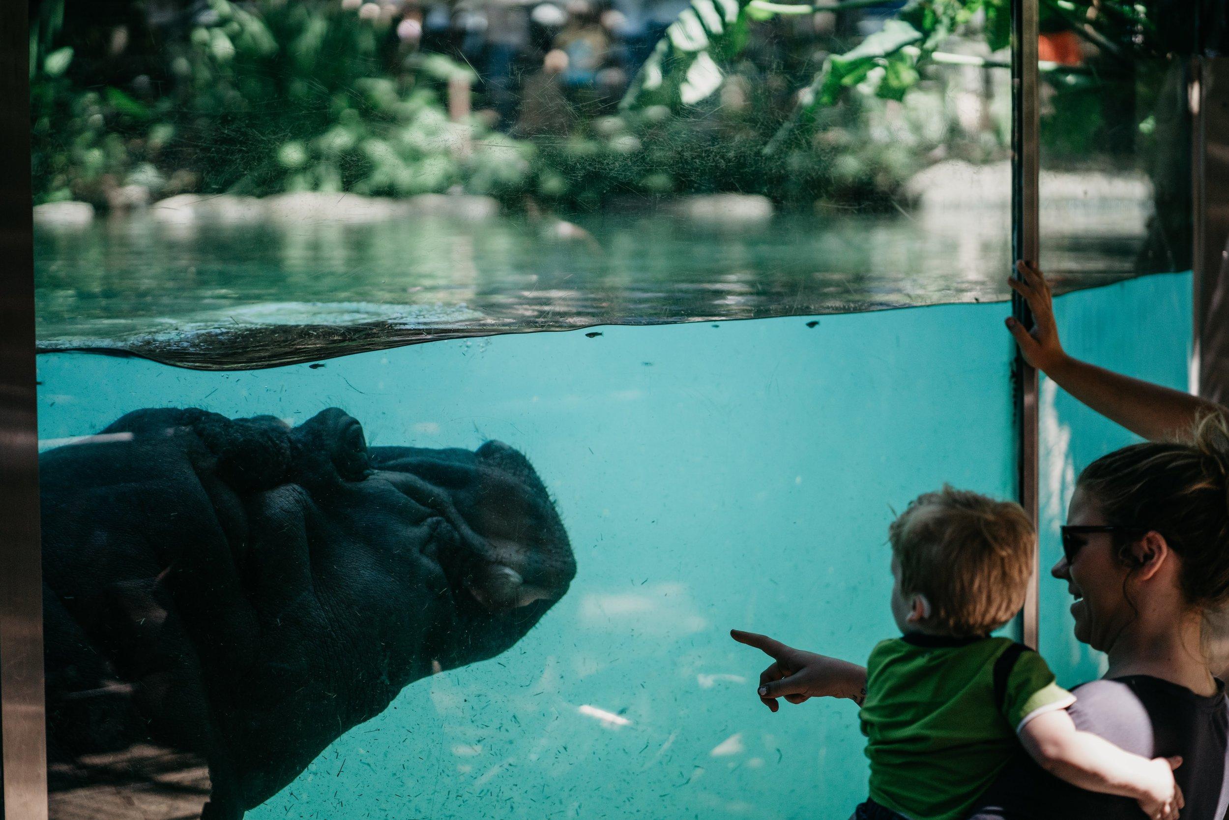 San Diego Zoo - Doodiebearz.com