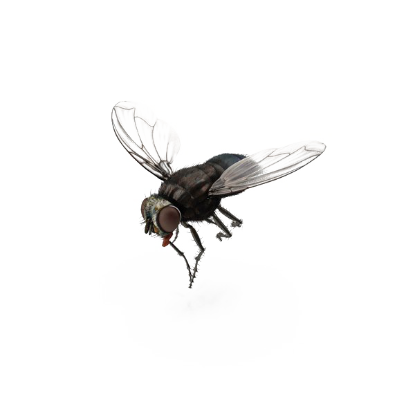 Fly-PNG-Transparent-File.png