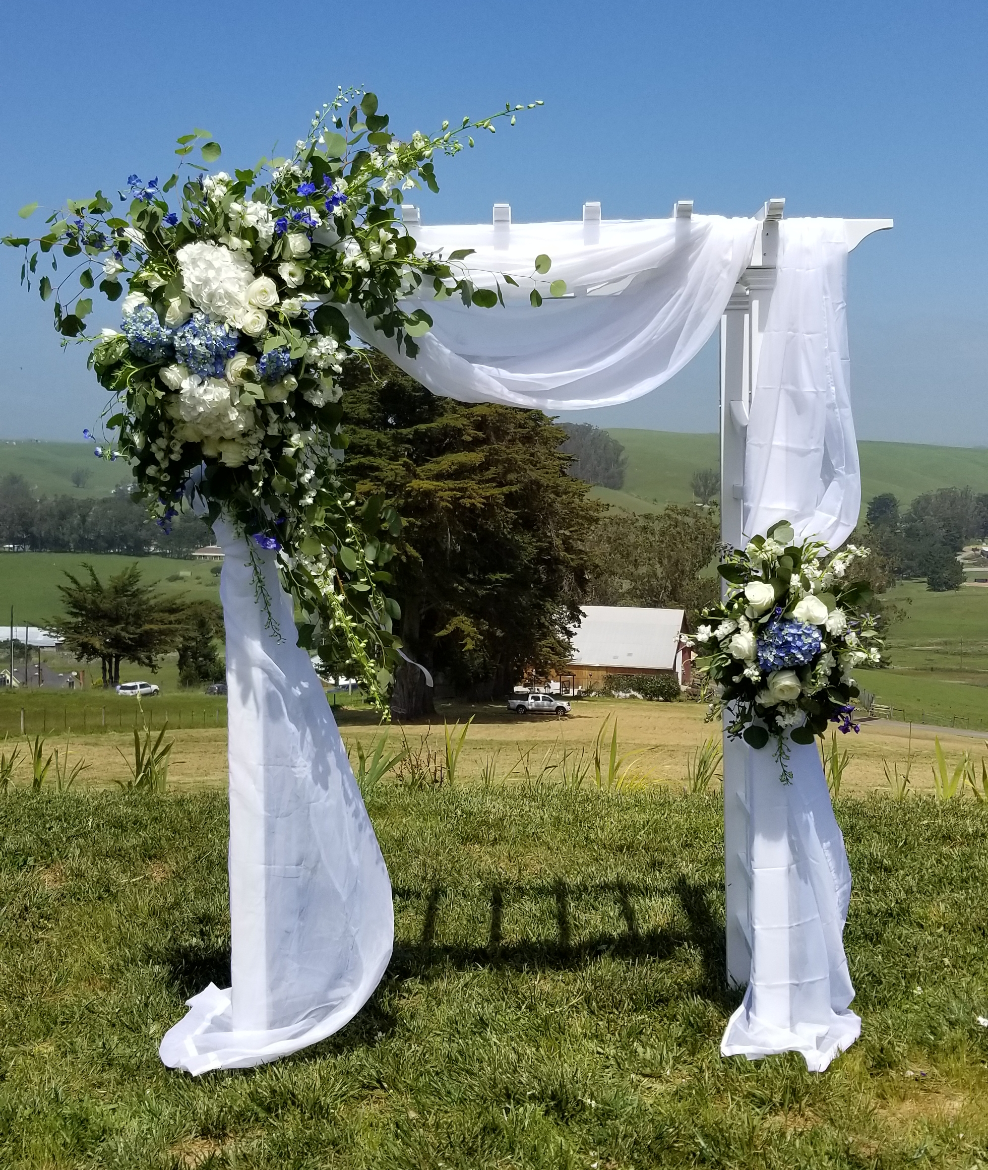 Romantic Tomales wedding, arch draped in sheer white, Floral arrangements featuring crisp white roses and calla lilies, with a splash of blue hydrangea and delphinium, Springhill Estate, Tomales
