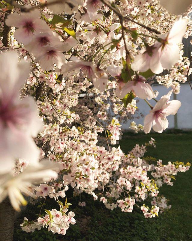 Guten Morgen. Ich bin so froh, dass es endlich auch mal in unserer Gegend ein paar Tropfen regnet. 😊 Also falls euch das schlechte Wetter nicht sogut gefällt denkt einfach daran: no rain, no flowers 🌱🌱🌱🌸 Habt einen wunderbaren Start in die neue Woche!  #blumenbund #landwirtschaft #slowflowers #norainnoflowers #mondaymotivation #wecandothis #gutenwochenstart