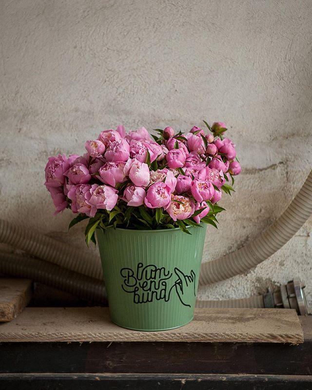 Ein paar wunderbare Pfingstrosen hab ich noch auf Lager aber schön langsam neigt sich die Pfingsrosen-Saison dem Ende zu. Es ist jetzt einfach zu warm für diese wunderbaren Frühjahrsstauden.  Ich freu mich aber schon auf nächstes Jahr, weil nach dem Sommer wollen wir nochmal ca 100 Pfingstrosen setzten. Die Pflanzen brauchen leider ein paar Jahre bis sie gut und reichlich blühen, aber die Vorfreude ist ja bekanntlich die schönste Freude. 🌸🌸🌸 #peonylove #flowerfarmer #slowflowers #landwirtschaftinösterreich #pinkflowers #peonylover #pfingstrosenzeit