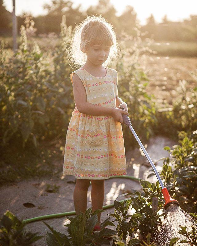Bevor der Herbst endgültig Einzug hält, teil ich hier noch ein paar Eindrücke von einem warmen Juliabend am Blumenfeld.  Das magische Abendlicht werd ich die nächsten Monate vermissen! ✨ #summerlover #blumenbund #nachhaltigeblumen #saisonal #regional #weinviertel #sommerabend #bioblumen #schnittblumenproduktion
