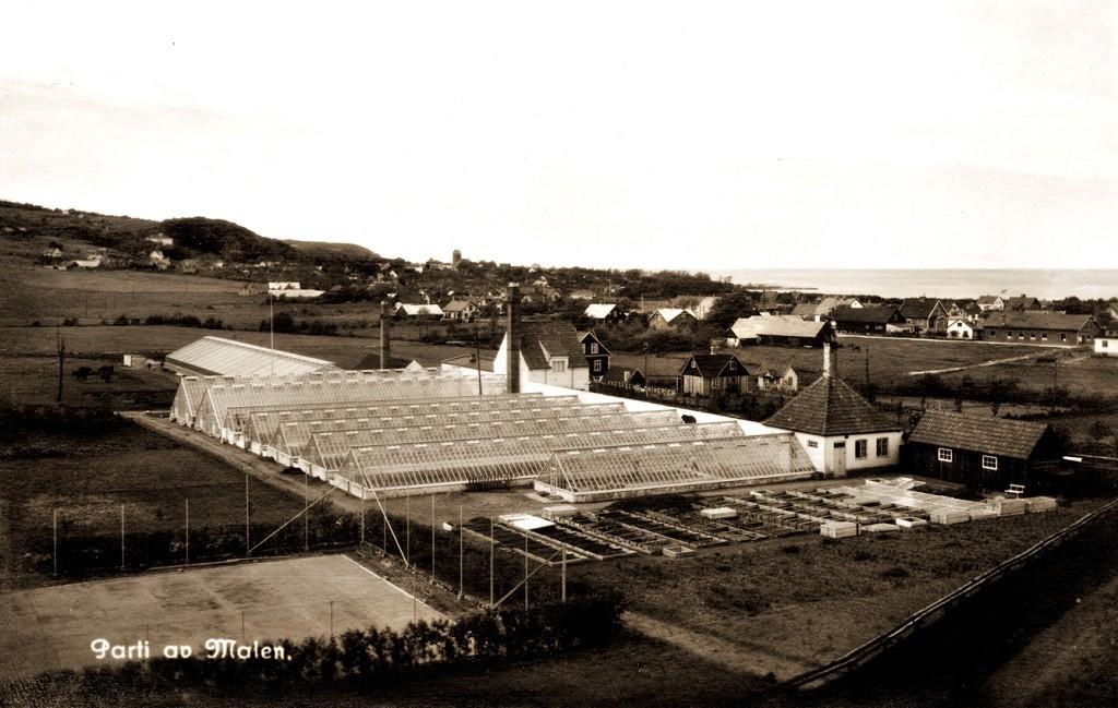 'Drivan' var tidigare drivhus för nejlikor