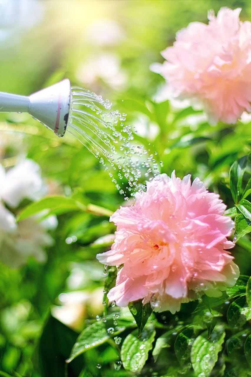 watering-2389941_1280.jpg