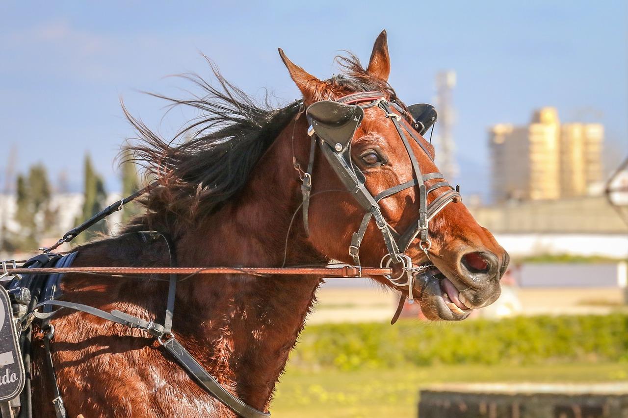horses-3960207_1280.jpg