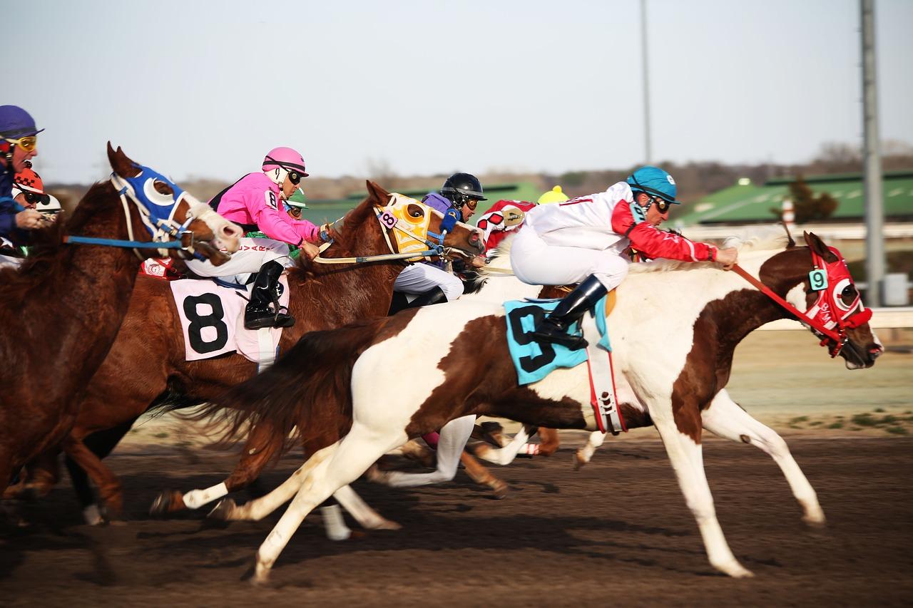 horses-2523301_1280.jpg