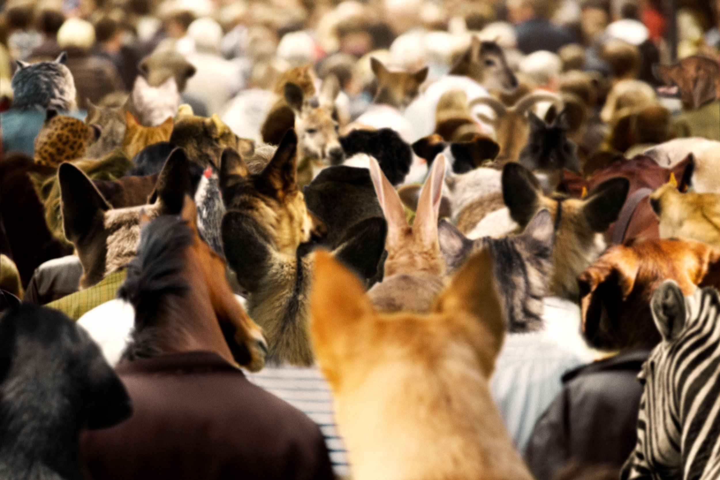 animal-head-crowd.jpg
