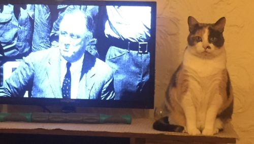 Since having a pet keeps me pleasant, I have a cat:Phebe. This is one of her favorite pics of herself; sitting with FDR.