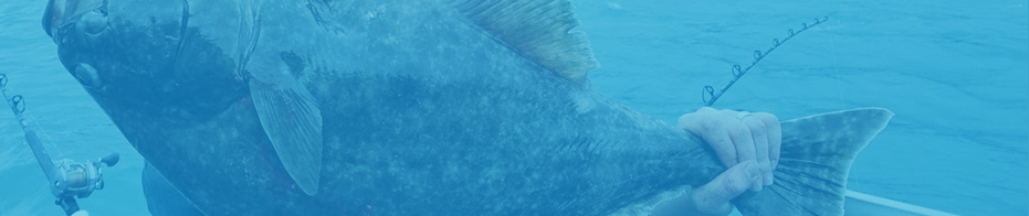 halibut fishing -