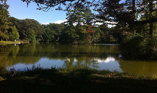 A small dog checks out the shore of Lake Hibiscus in Boston's Forest Hills Cemetery. Credit: Tate Williams