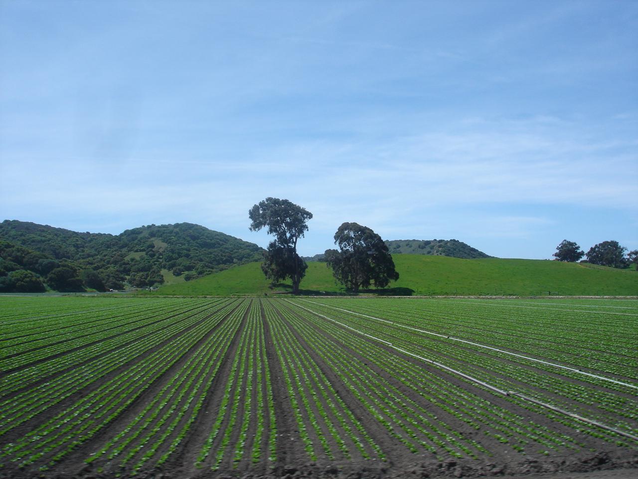 Greenfield_California.jpg