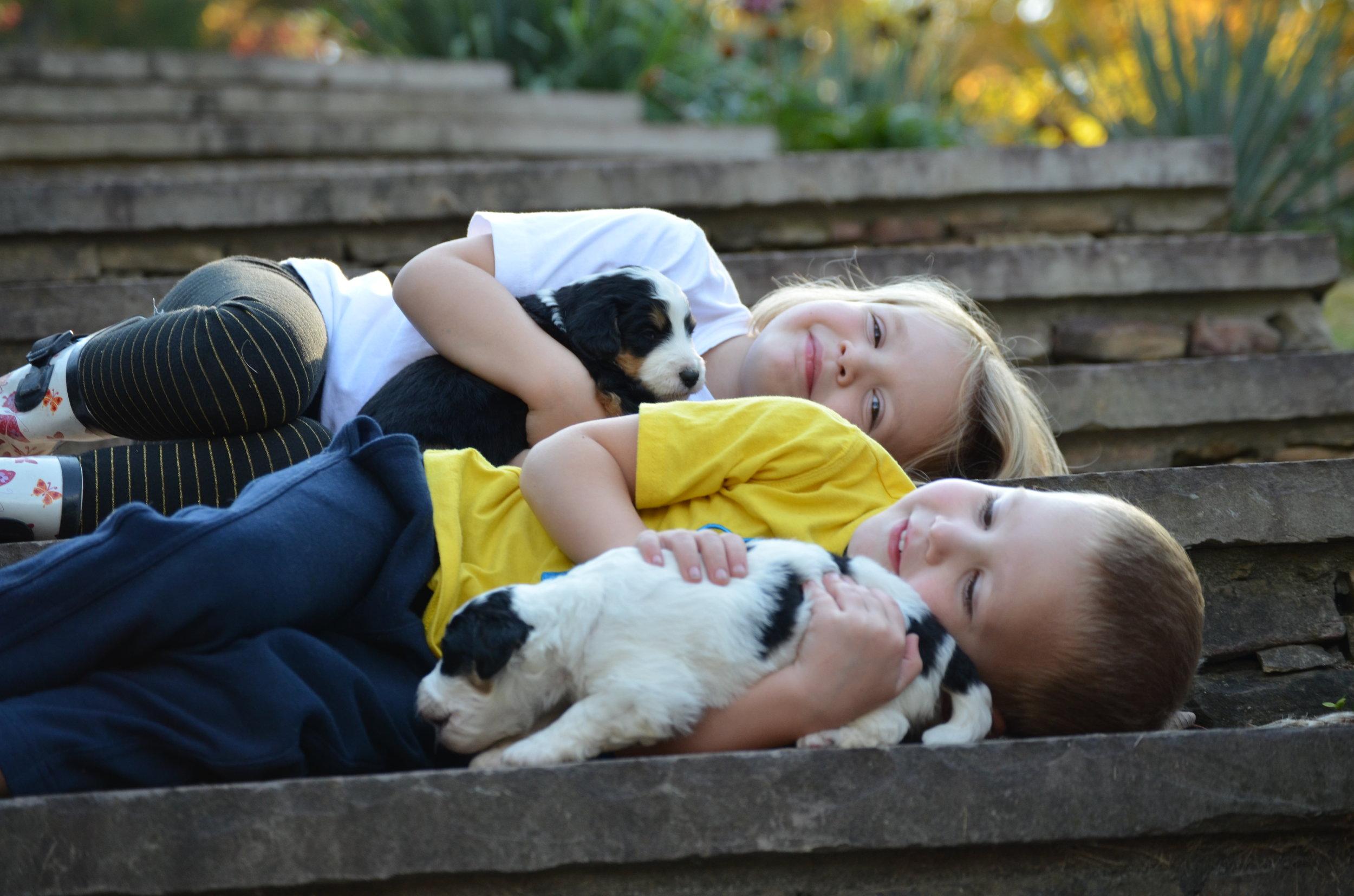 Swissdoodle-socialization