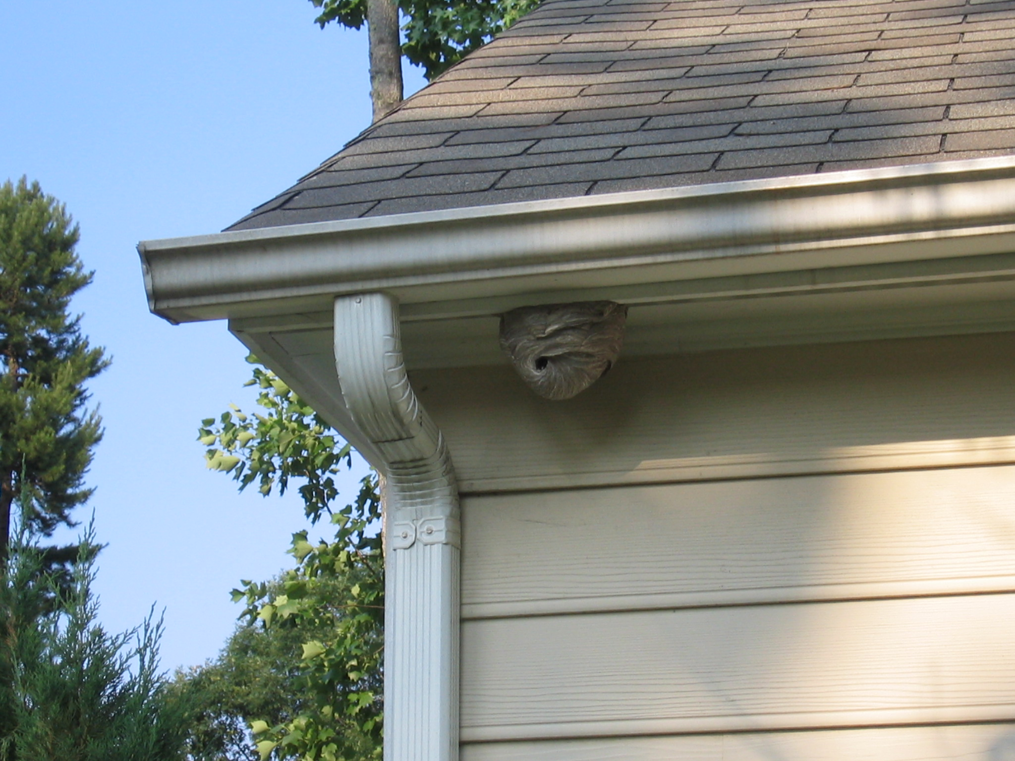 a wasp nest under the awning