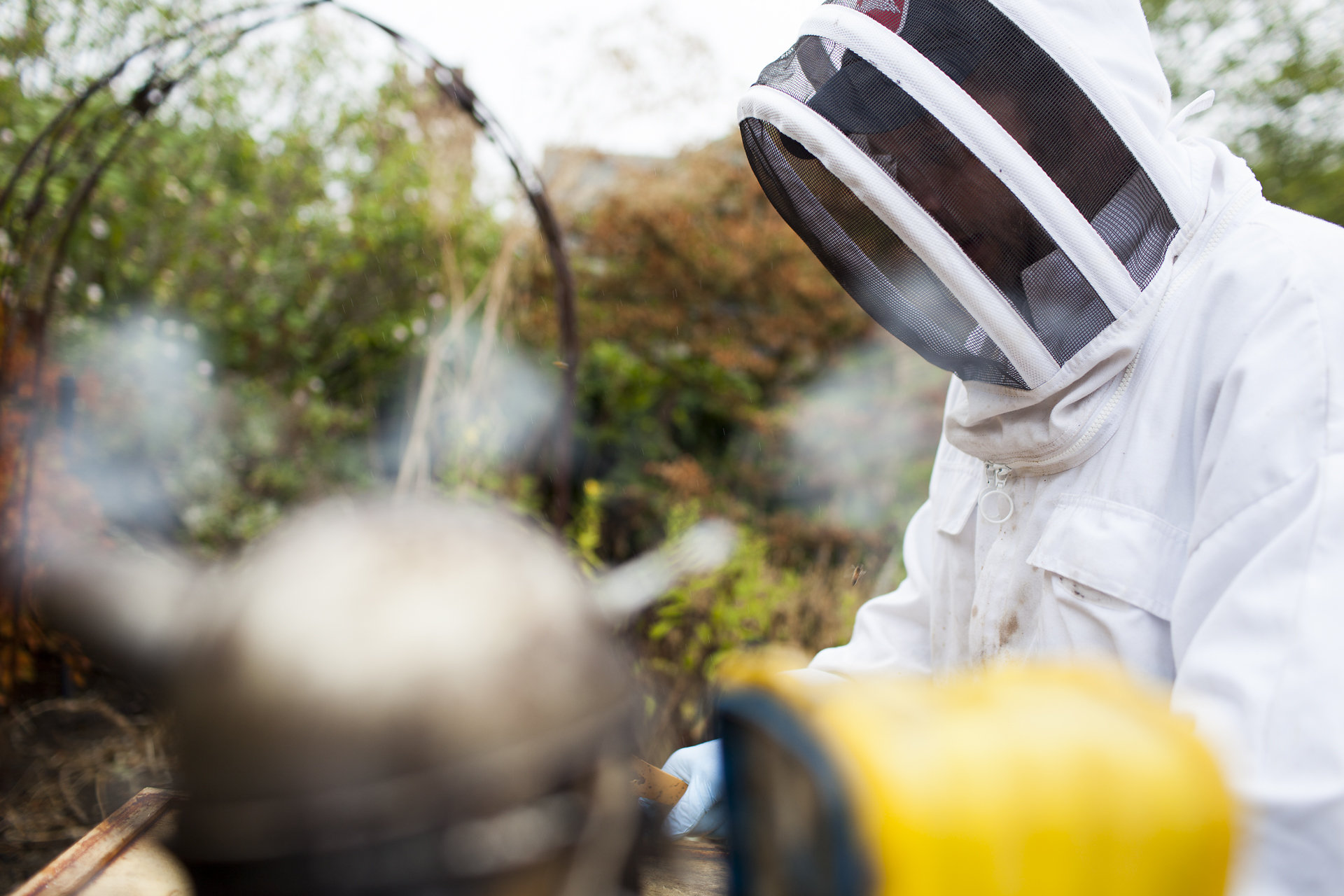 Learn all about beekeeping