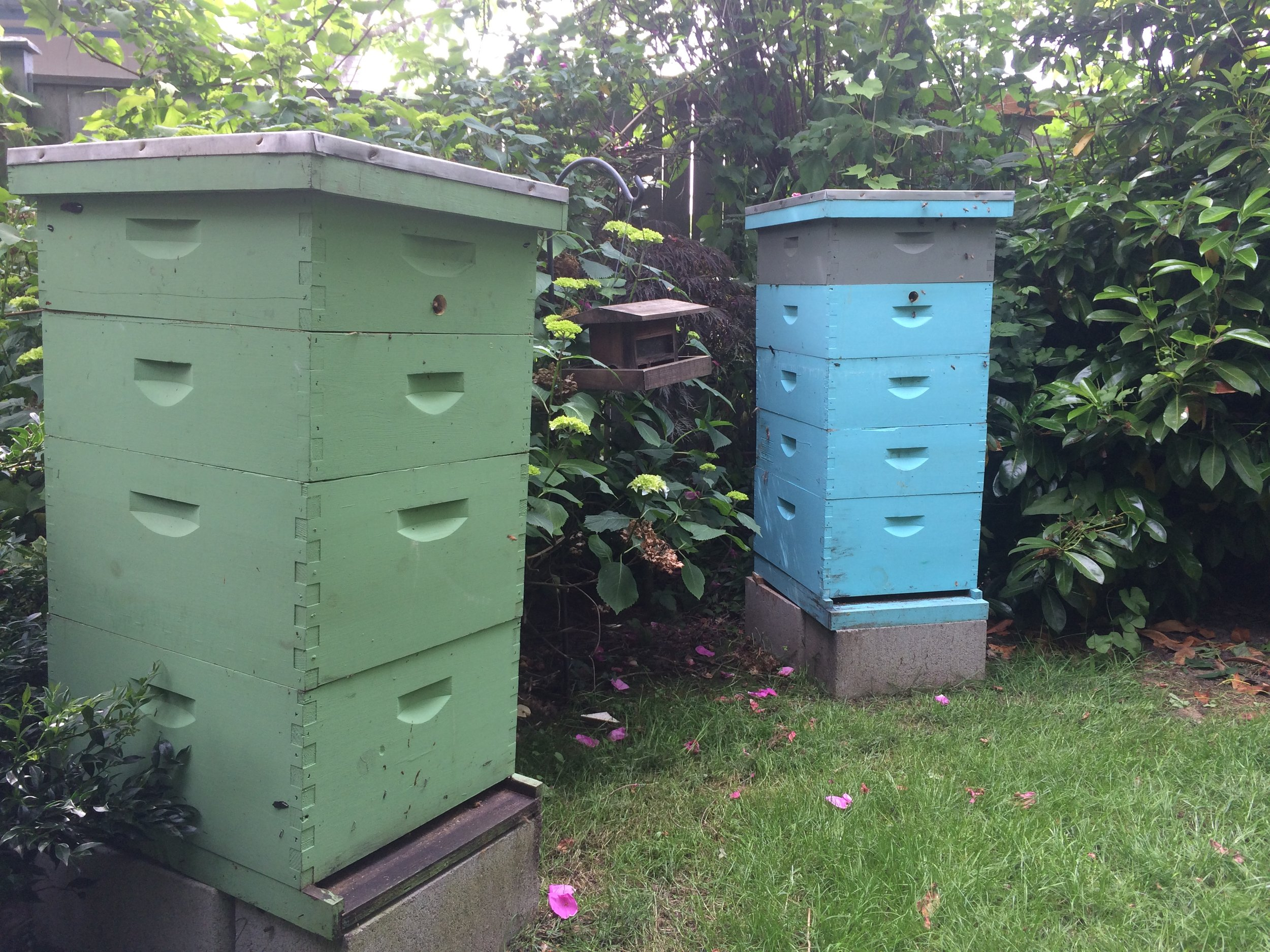 bees you and love and enjoy