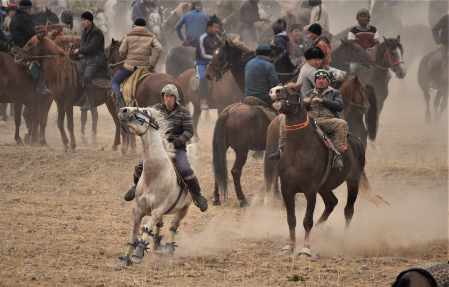 Horses running wild - in the opposite direction of the goat