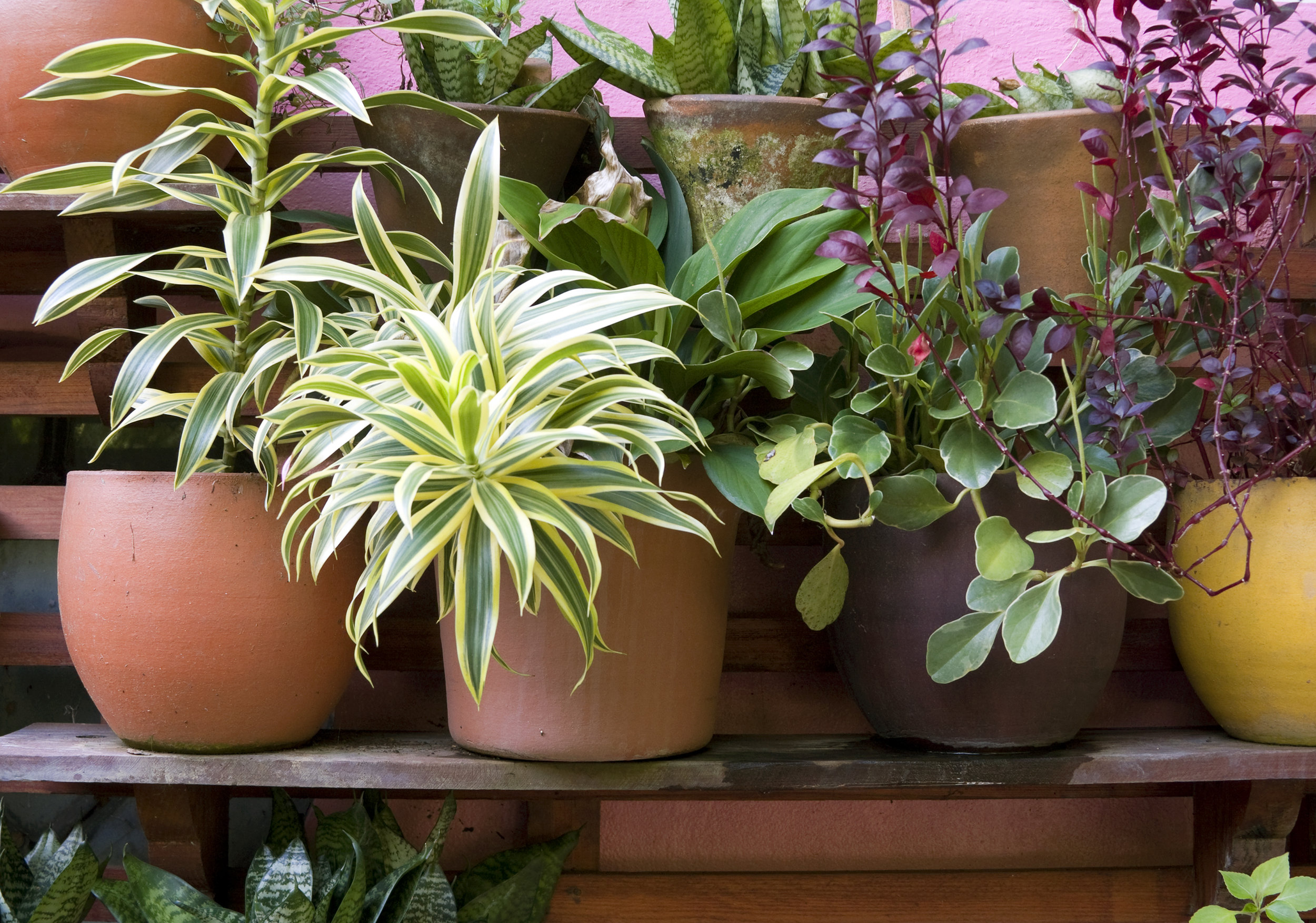 PLANTS aRE aMAZING. - We give them a little water, and they give us a more beautiful, vibrant, healthy home. But what about when you can't water them?Whether it's a vacation, business travel or just a super busy week, use Plant Keeper to keep your potted plants alive when you are not able to water them.Plant Keeper is a non-toxic, environmentally friendly, and all-natural plant feed in Pittsburgh, PA. One bottle treats up to 24 plants.