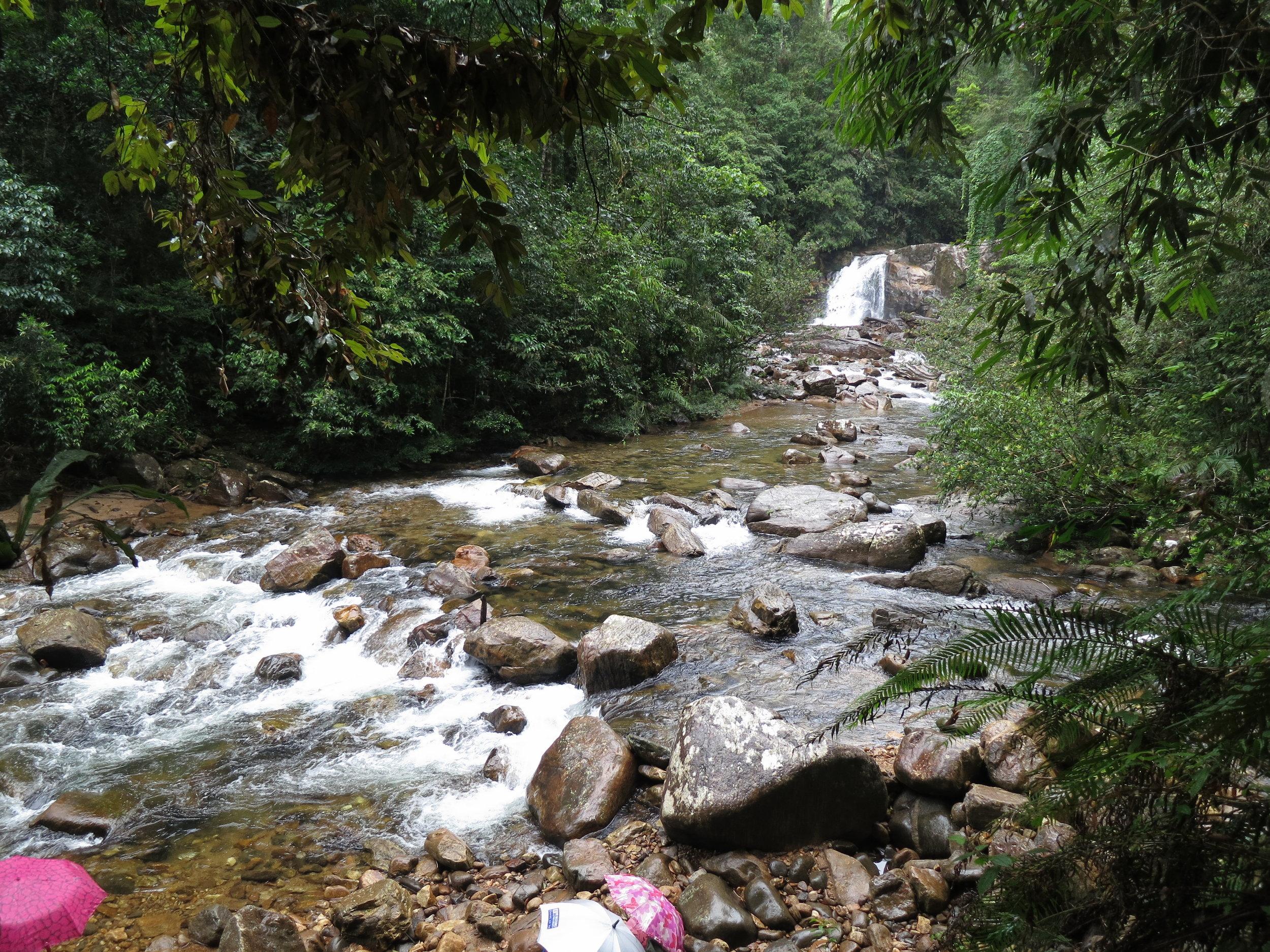 Sinharaja_Forest_waterfall.JPG