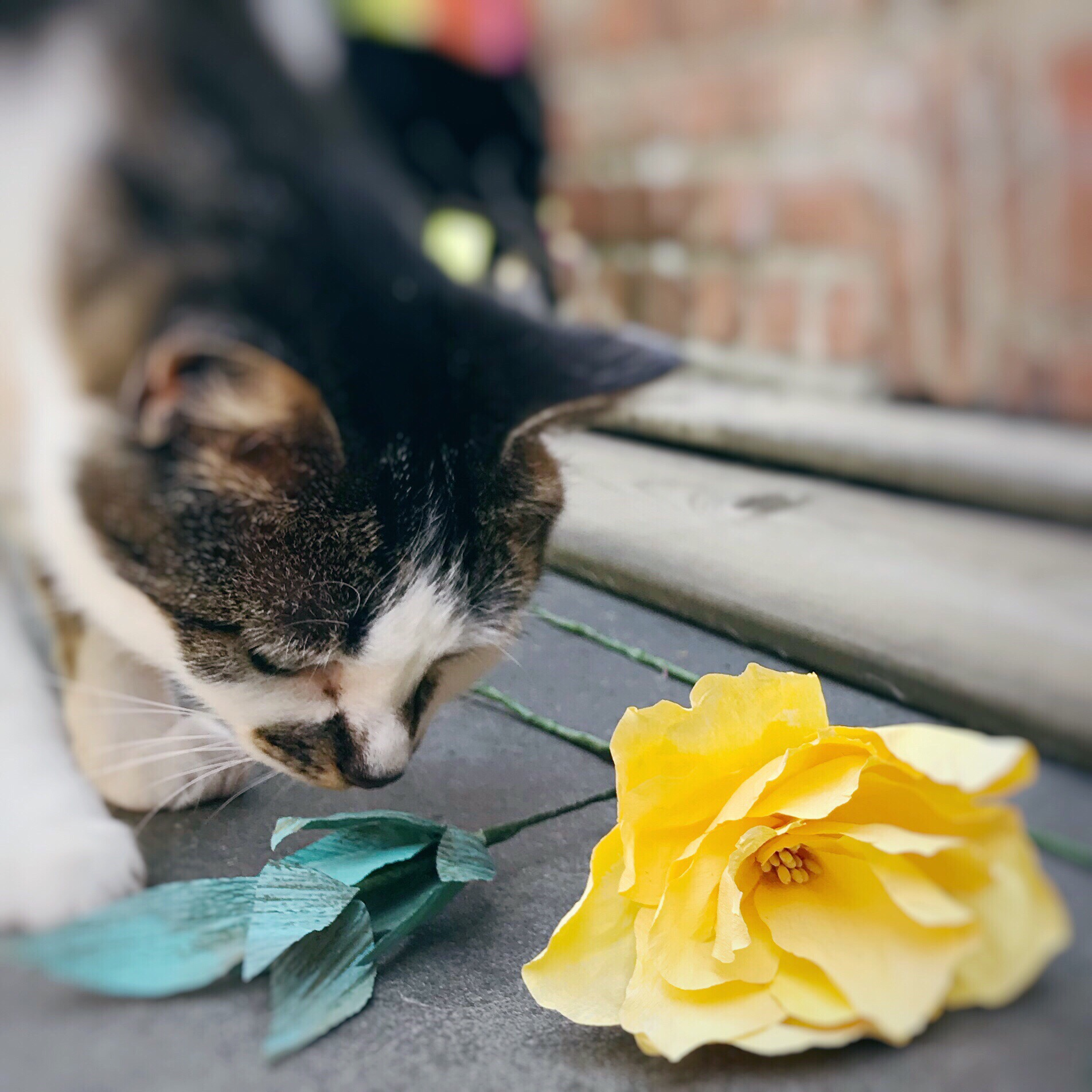 Lately, I really enjoy making paper flowers such as peonies and dahlias. It seems my cat Emma likes them too!
