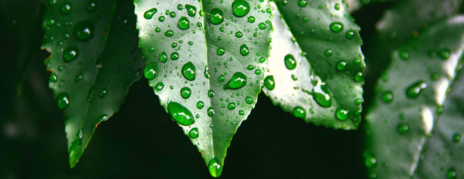 plantDietaArkana.jpg