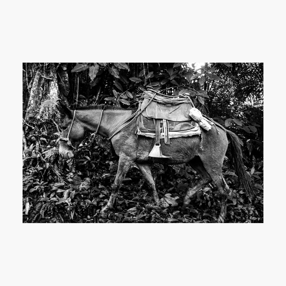 ©-2018-Harry-W-Edmonds-Photographer-Photographers-Note-The-Lost-City-PN12.jpg