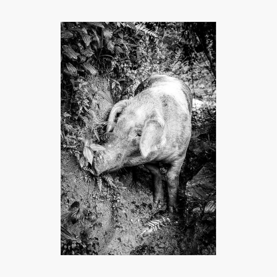 ©-2018-Harry-W-Edmonds-Photographer-Photographers-Note-The-Lost-City-PN05.jpg