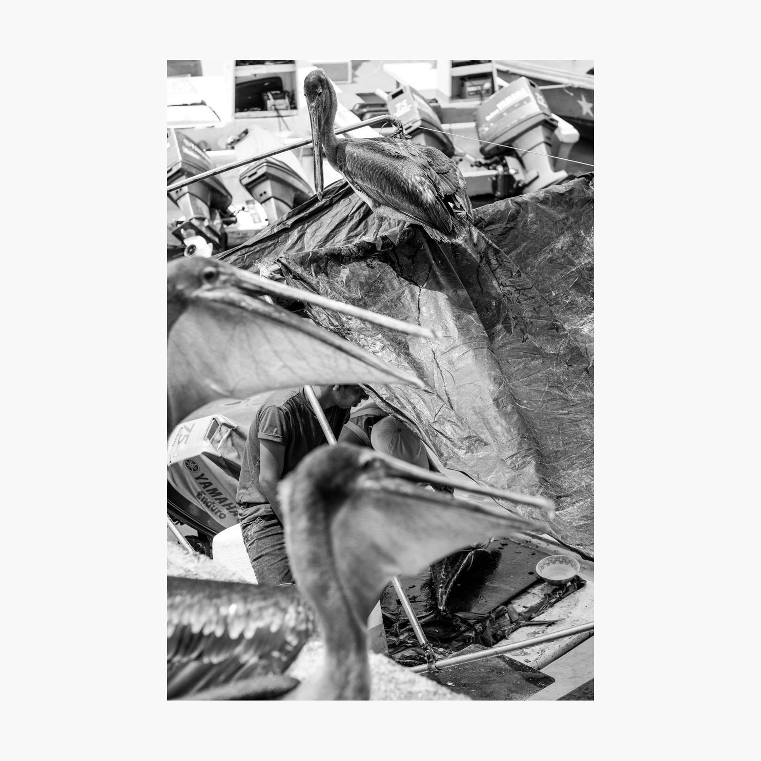 ©-2018-Harry-W-Edmonds-London-Photographers-Note-11-The-Fishermen-PN01.jpg
