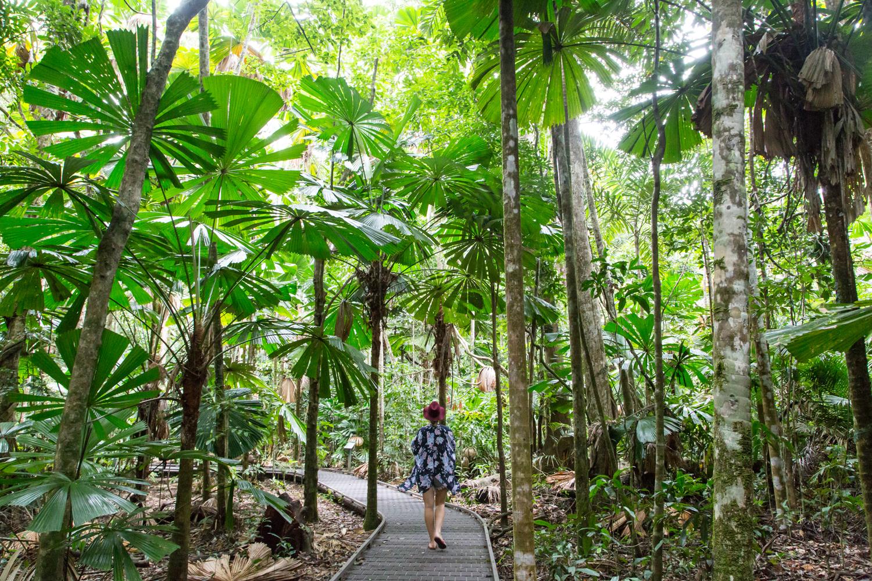 Worlds-Oldest-Rainforest.jpg