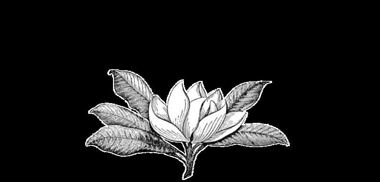 magnolia's.png