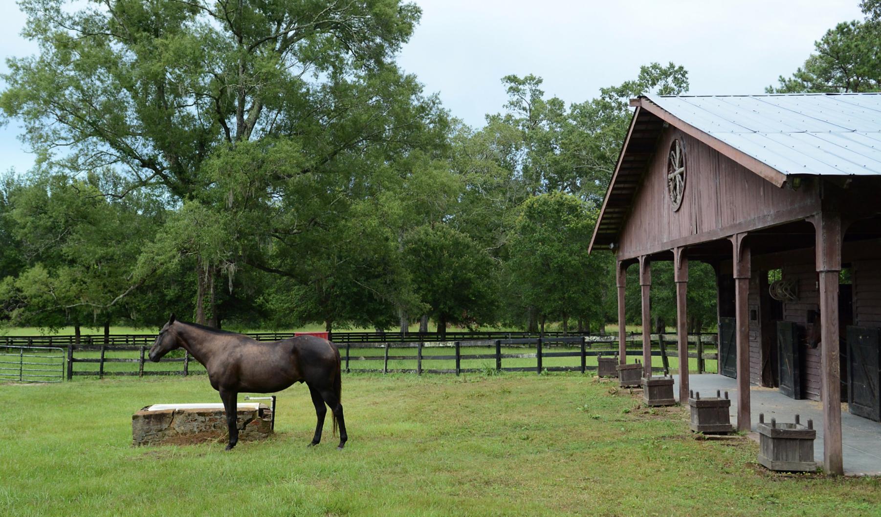 Perfect Barn Weddings in South Carolina | Palmetto State Weddings