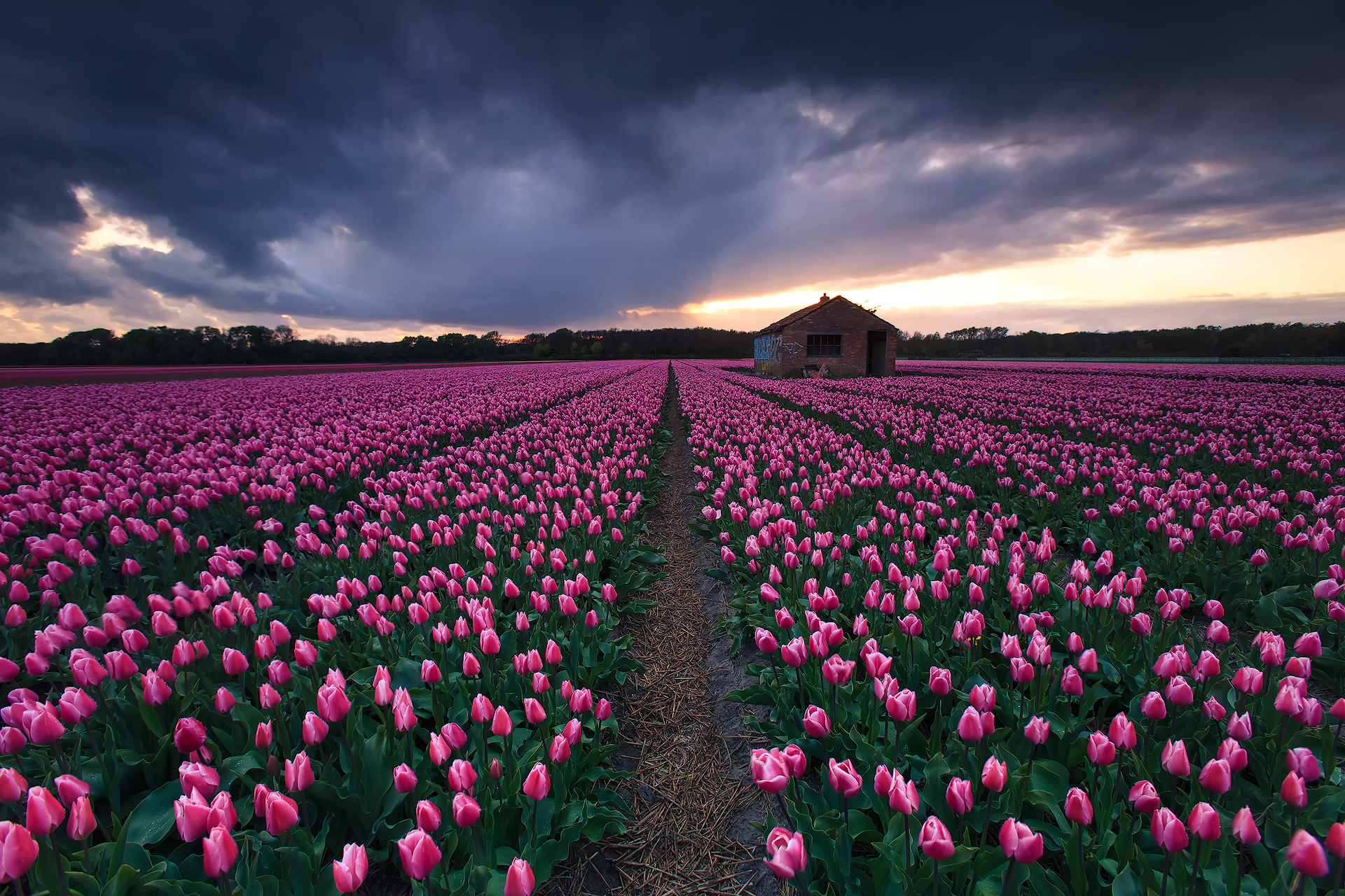 A shed in pink (Vogelenzang, The Netherlands)