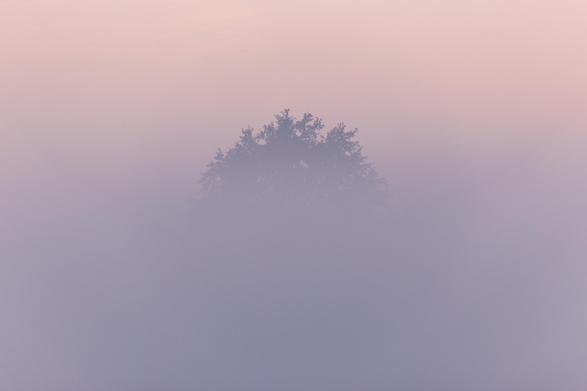 A tree (Ravels, Belgium)