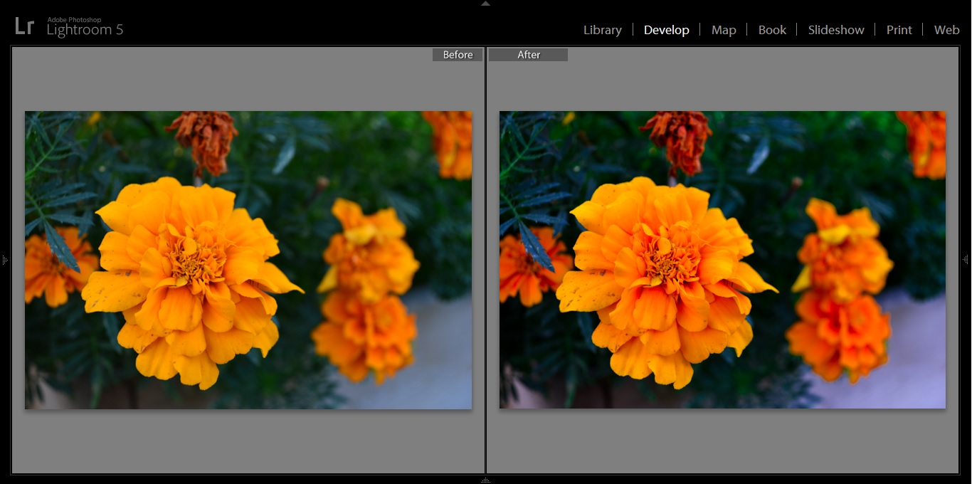 flowers before after.jpg