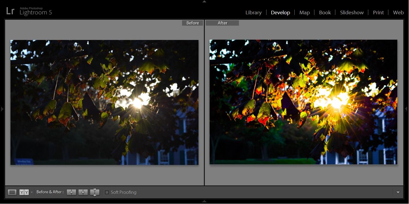 downtown leesburg leaves sun tree before after.jpg