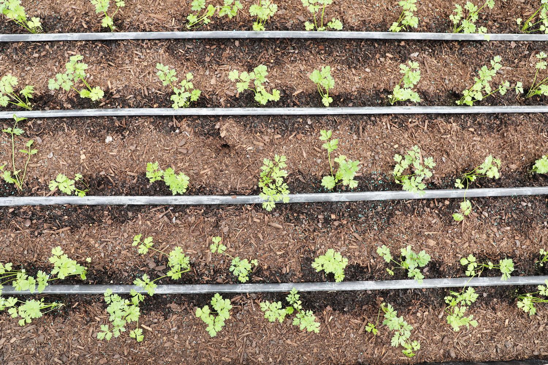 Scarborough-Fare-Herbs-42.jpg