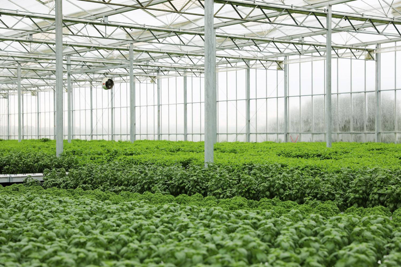 Scarborough-Fare-Herbs-46.jpg